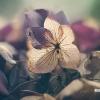 Що робити якщо квітка гине?