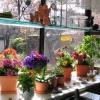 Квіткова вітрина в вікні