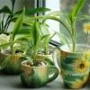 Квіти в домашніх умовах
