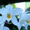 Квіти в горщиках - яка рослина вам підходить?