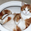Як привчити кошеня до туалету?