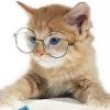 Якою має бути розумна кішка?