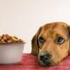 Який корм вибрати для собаки?