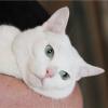 Кастрація кішок і котів: позитивні аспекти
