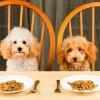 Корм для собак: як вибрати найкорисніший