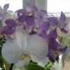 Корисні властивості квітів