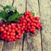 Корисні властивості ягоди калини (+3 народних рецепта)