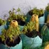 Розбиваємо міні-сад в яєчній шкаралупі