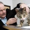 Усипляння кішки - коли і з якою метою робити?