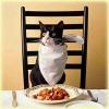 Вибір корму для кішок