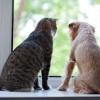Виклик ветеринара додому - швидко, зручно і ефективно